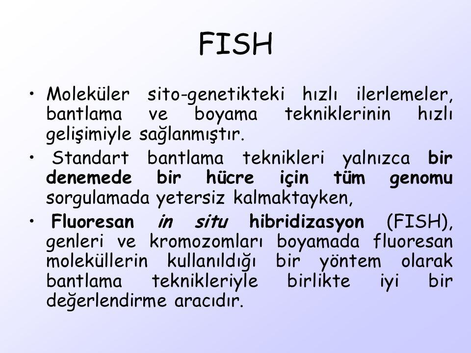 FISH Moleküler sito-genetikteki hızlı ilerlemeler, bantlama ve boyama tekniklerinin hızlı gelişimiyle sağlanmıştır.
