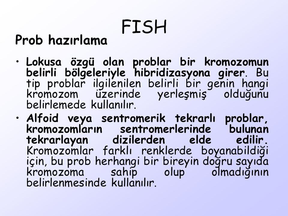 FISH Prob hazırlama.