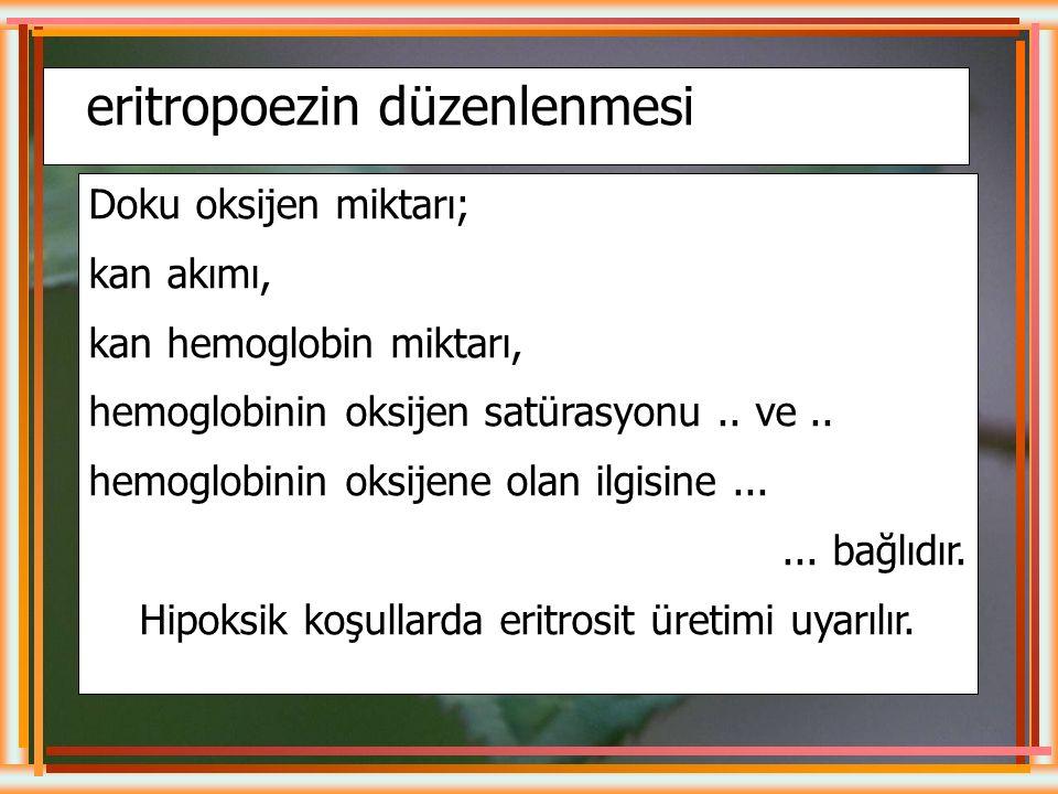 Hipoksik koşullarda eritrosit üretimi uyarılır.