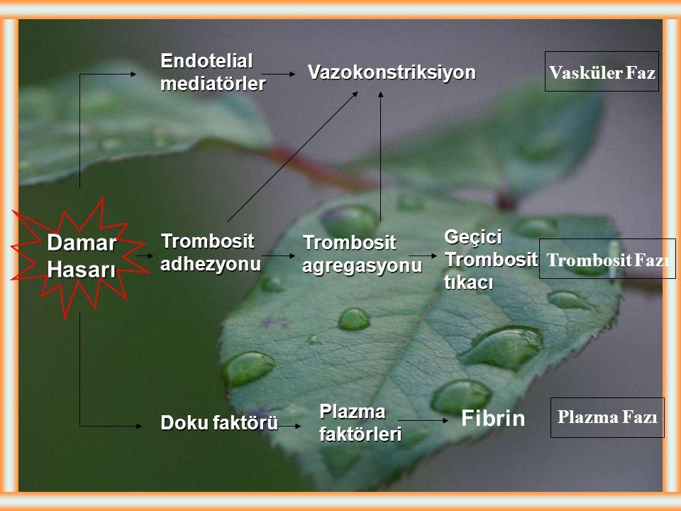 Damar Hasarı Fibrin Endotelial mediatörler Trombosit adhezyonu