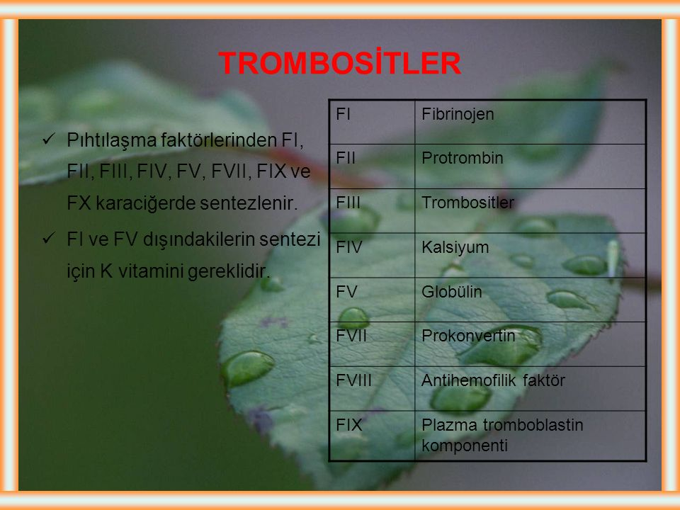 TROMBOSİTLER FI. Fibrinojen. FII. Protrombin. FIII. Trombositler. FIV. Kalsiyum. FV. Globülin.