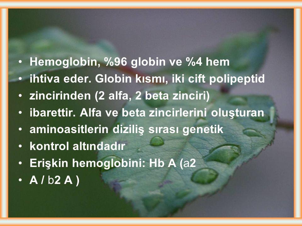 Hemoglobin, %96 globin ve %4 hem