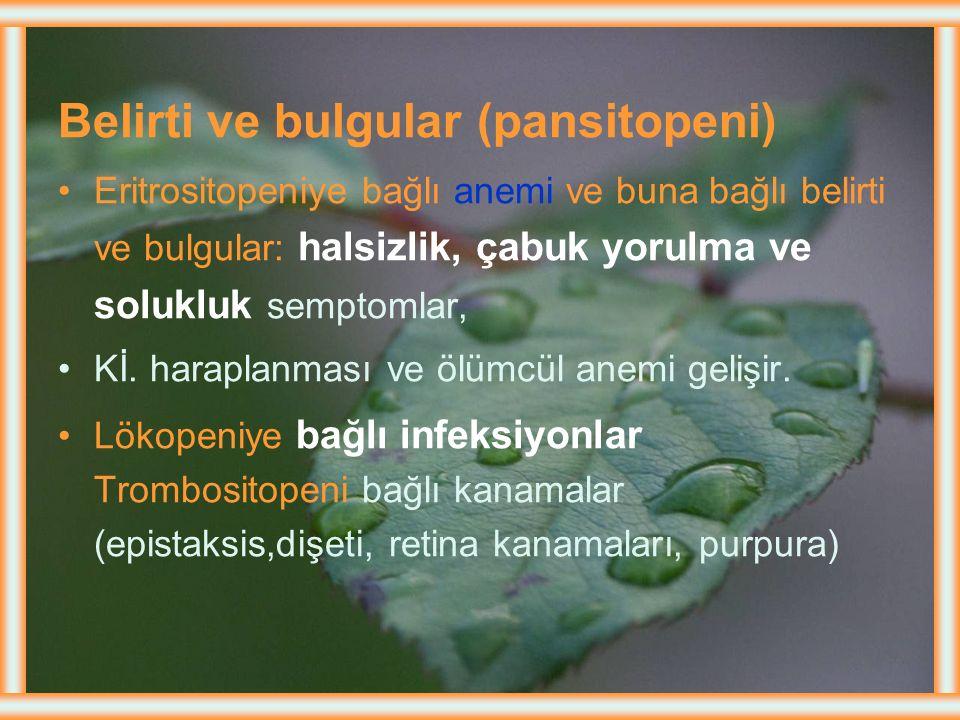 Belirti ve bulgular (pansitopeni)