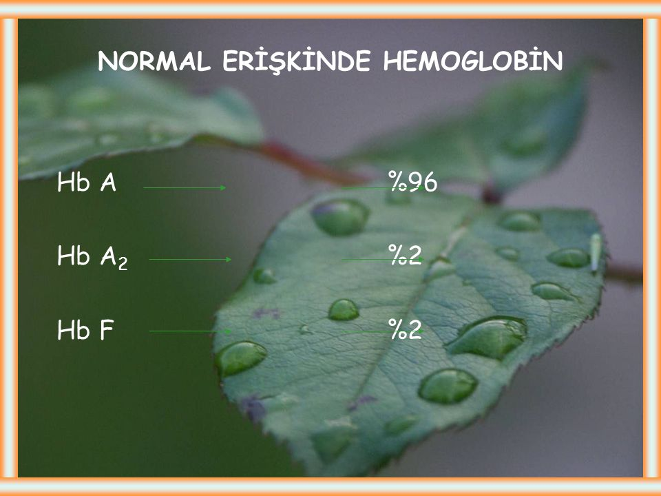 NORMAL ERİŞKİNDE HEMOGLOBİN