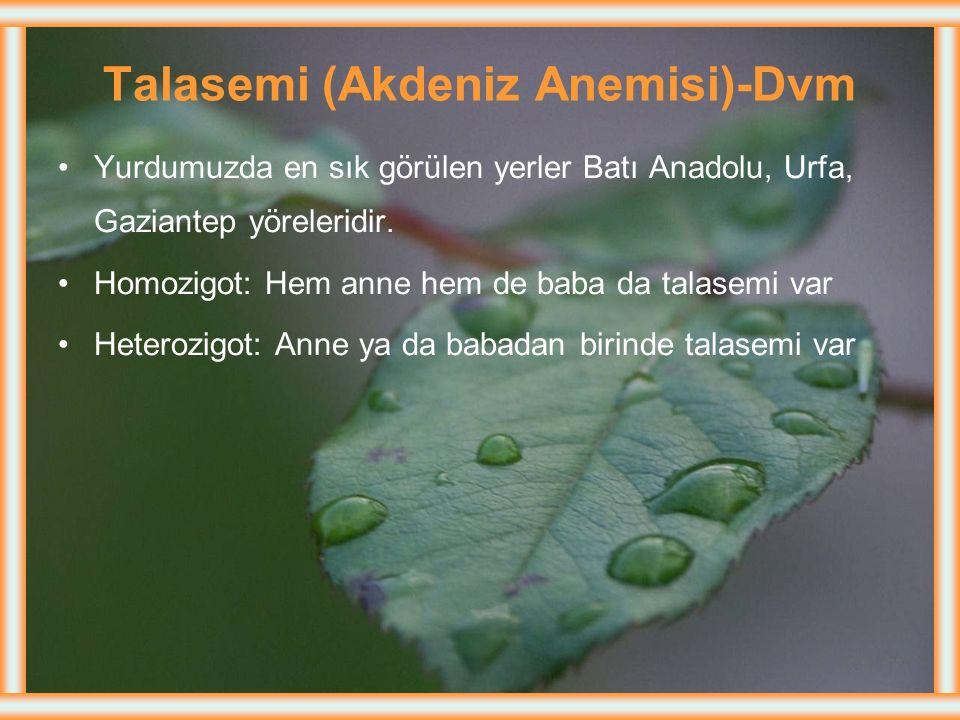 Talasemi (Akdeniz Anemisi)-Dvm