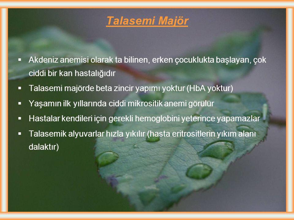 Talasemi Majör Akdeniz anemisi olarak ta bilinen, erken çocuklukta başlayan, çok ciddi bir kan hastalığıdır.