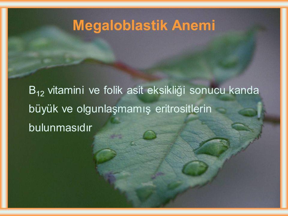 Megaloblastik Anemi B12 vitamini ve folik asit eksikliği sonucu kanda
