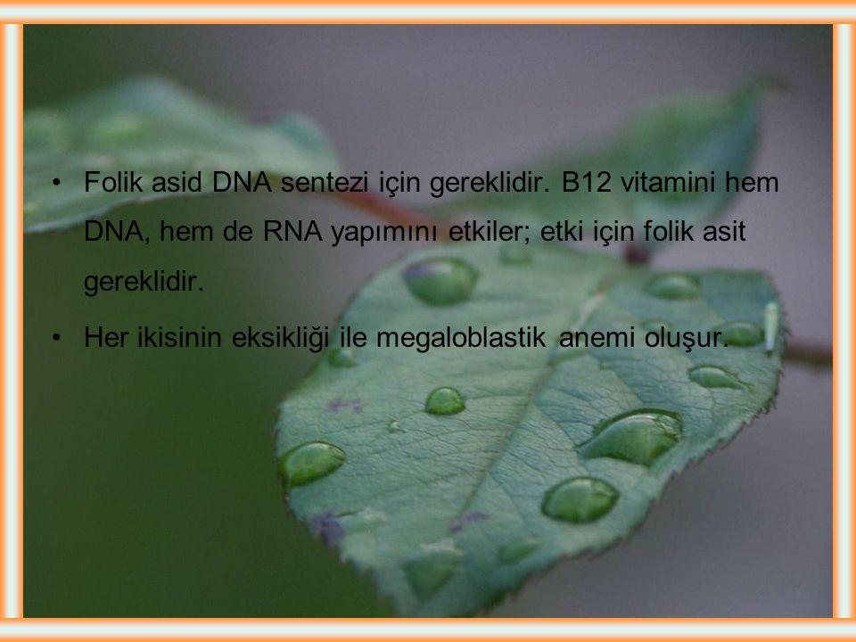 Folik asid DNA sentezi için gereklidir