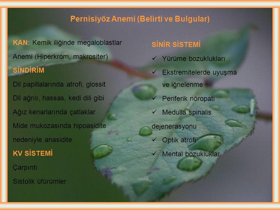 Pernisiyöz Anemi (Belirti ve Bulgular)