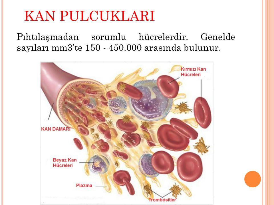 KAN PULCUKLARI Pıhtılaşmadan sorumlu hücrelerdir.