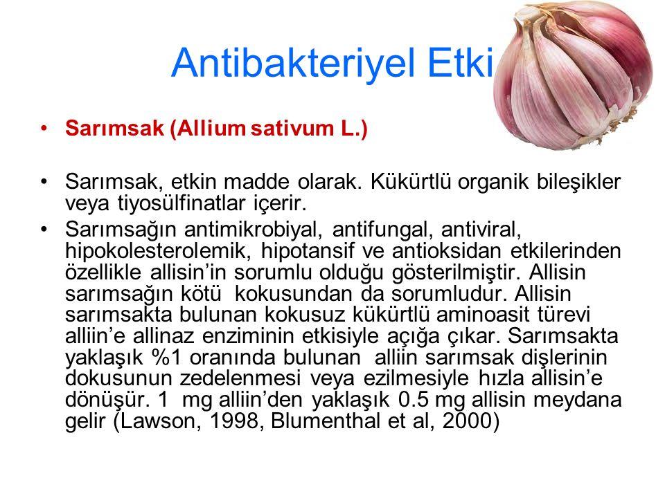 Antibakteriyel Etki Sarımsak (Allium sativum L.)
