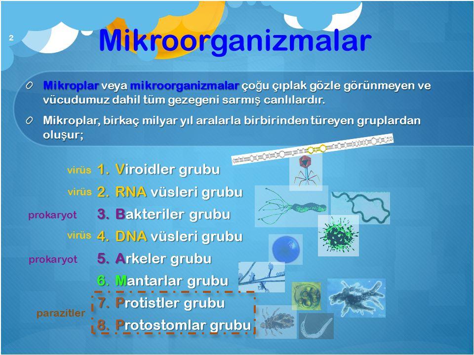 Mikroorganizmalar Viroidler grubu RNA vüsleri grubu Bakteriler grubu