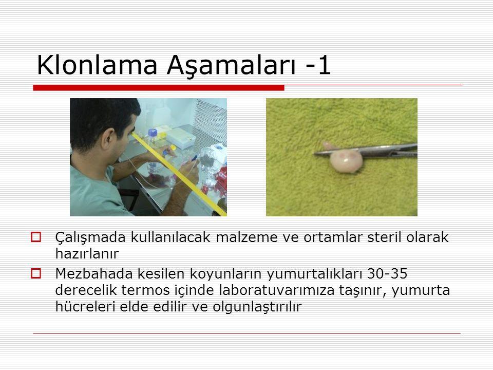 Klonlama Aşamaları -1 Çalışmada kullanılacak malzeme ve ortamlar steril olarak hazırlanır.