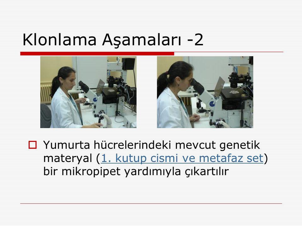 Klonlama Aşamaları -2 Yumurta hücrelerindeki mevcut genetik materyal (1. kutup cismi ve metafaz set) bir mikropipet yardımıyla çıkartılır.