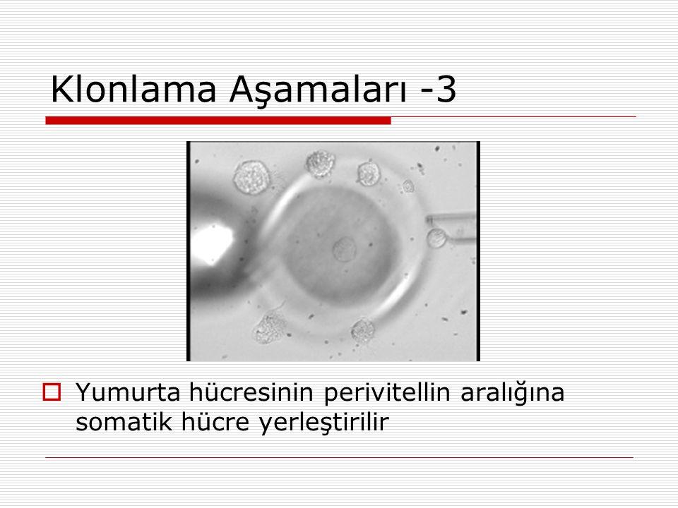 Klonlama Aşamaları -3 Yumurta hücresinin perivitellin aralığına somatik hücre yerleştirilir 28
