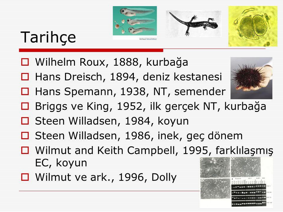 Tarihçe Wilhelm Roux, 1888, kurbağa