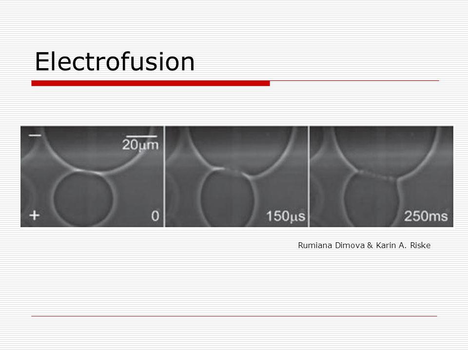 Electrofusion Rumiana Dimova & Karin A. Riske