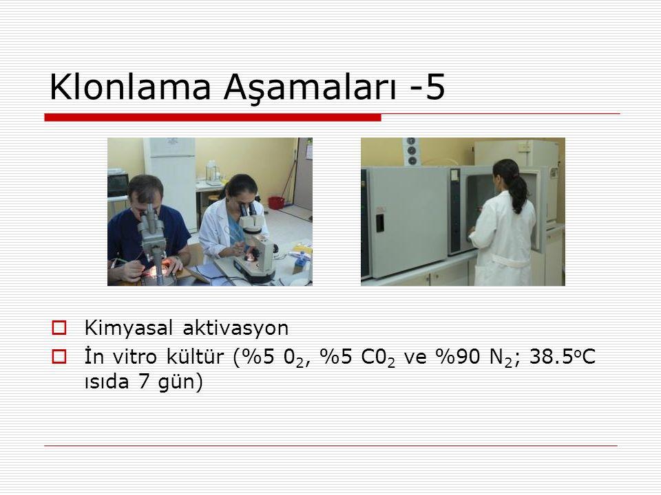Klonlama Aşamaları -5 Kimyasal aktivasyon