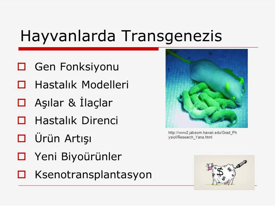 Hayvanlarda Transgenezis