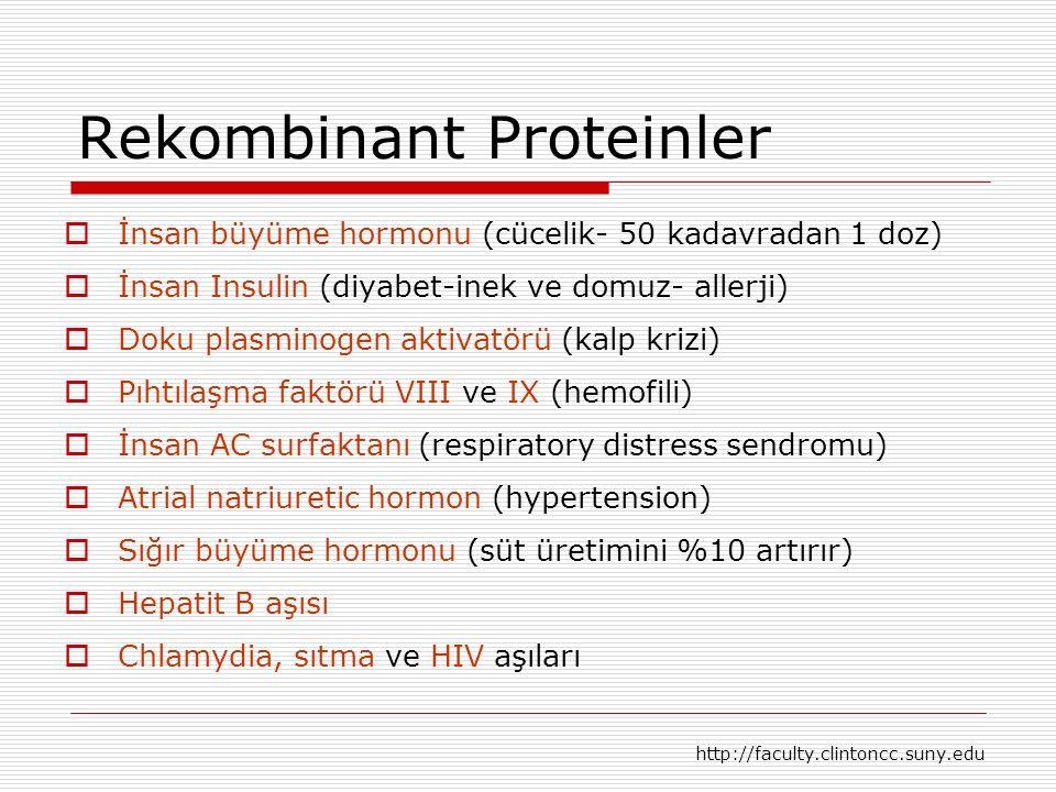Rekombinant Proteinler