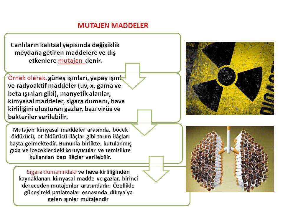 MUTAJEN MADDELER Canlıların kalıtsal yapısında değişiklik meydana getiren maddelere ve dış etkenlere mutajen denir.