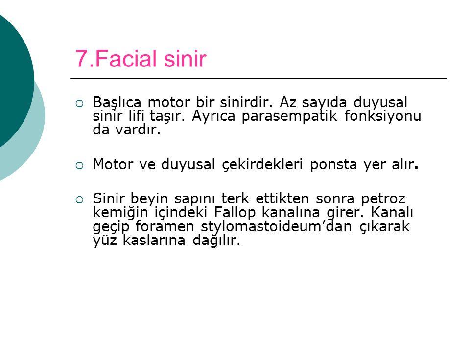 7.Facial sinir Başlıca motor bir sinirdir. Az sayıda duyusal sinir lifi taşır. Ayrıca parasempatik fonksiyonu da vardır.
