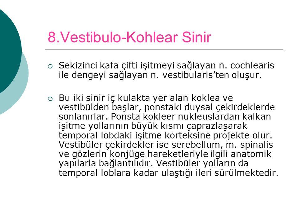 8.Vestibulo-Kohlear Sinir