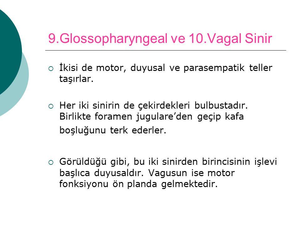 9.Glossopharyngeal ve 10.Vagal Sinir