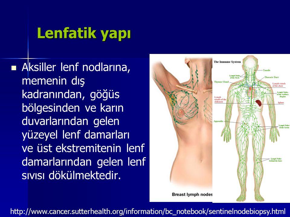 Lenfatik yapı