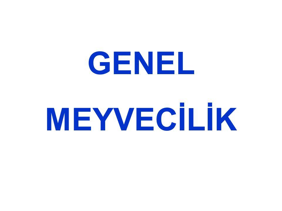 GENEL MEYVECİLİK