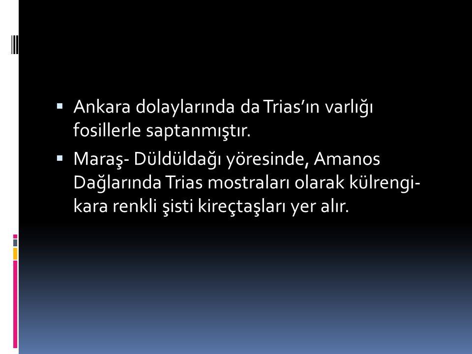 Ankara dolaylarında da Trias'ın varlığı fosillerle saptanmıştır.