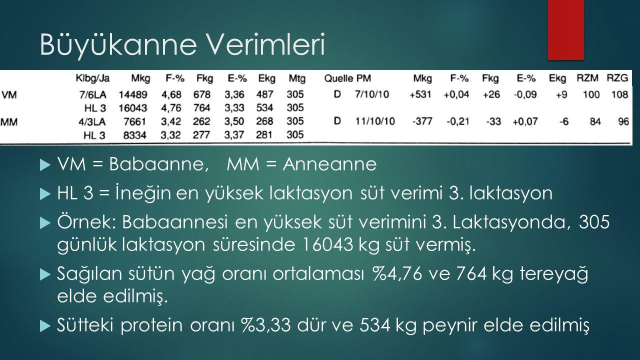 Büyükanne Verimleri VM = Babaanne, MM = Anneanne
