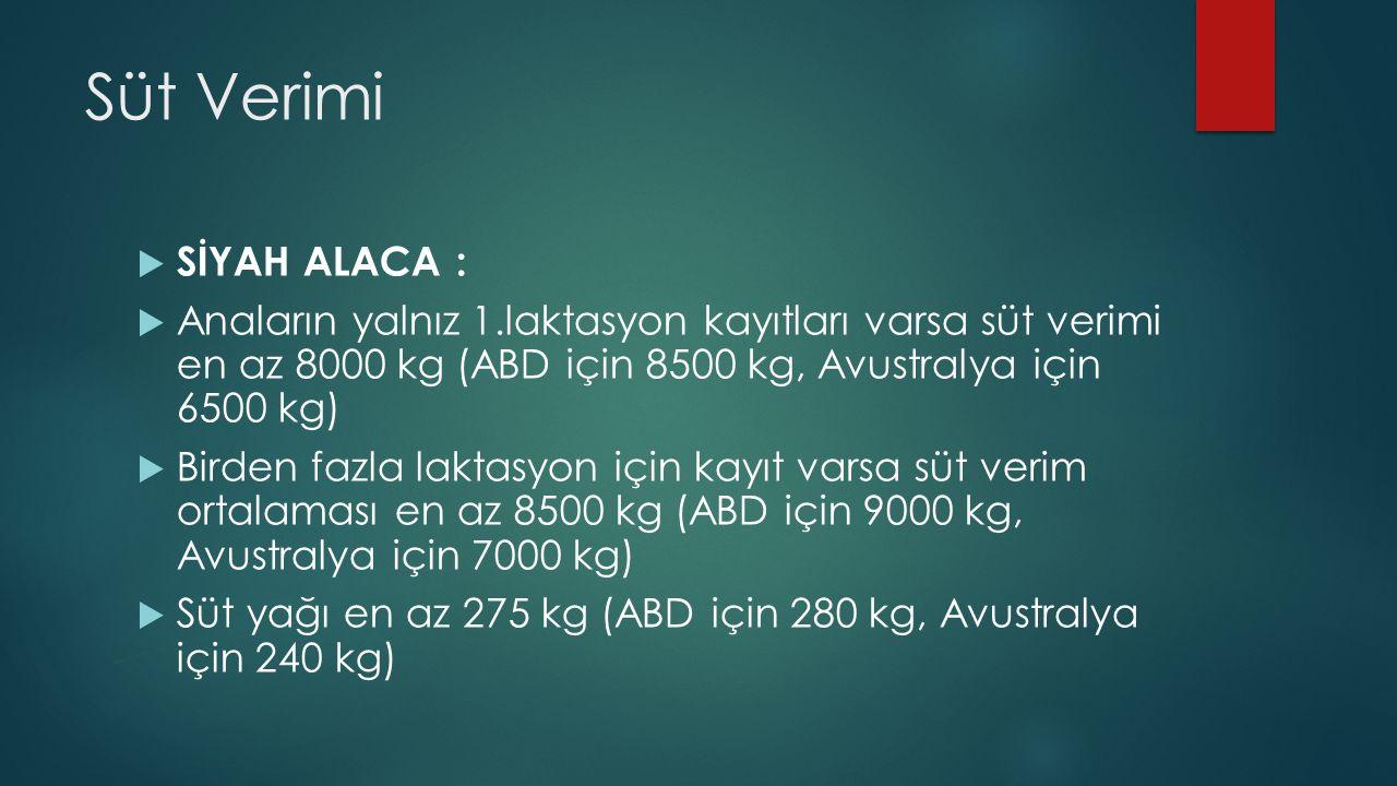 Süt Verimi SİYAH ALACA :