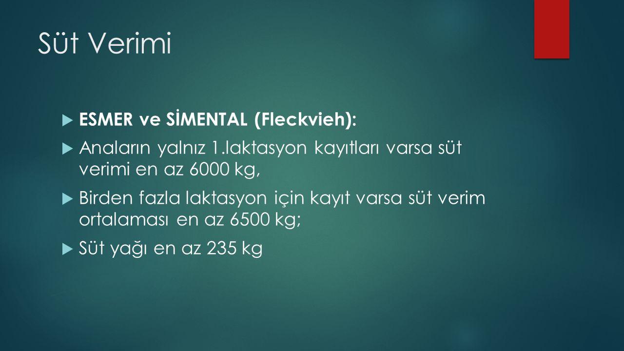 Süt Verimi ESMER ve SİMENTAL (Fleckvieh):