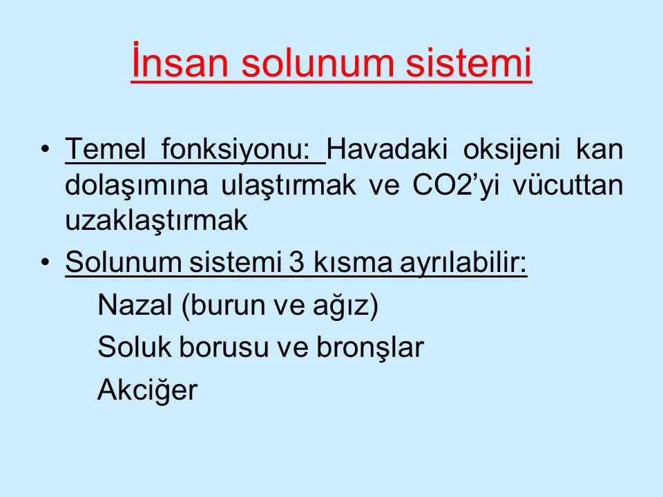 İnsan solunum sistemi Temel fonksiyonu: Havadaki oksijeni kan dolaşımına ulaştırmak ve CO2'yi vücuttan uzaklaştırmak.
