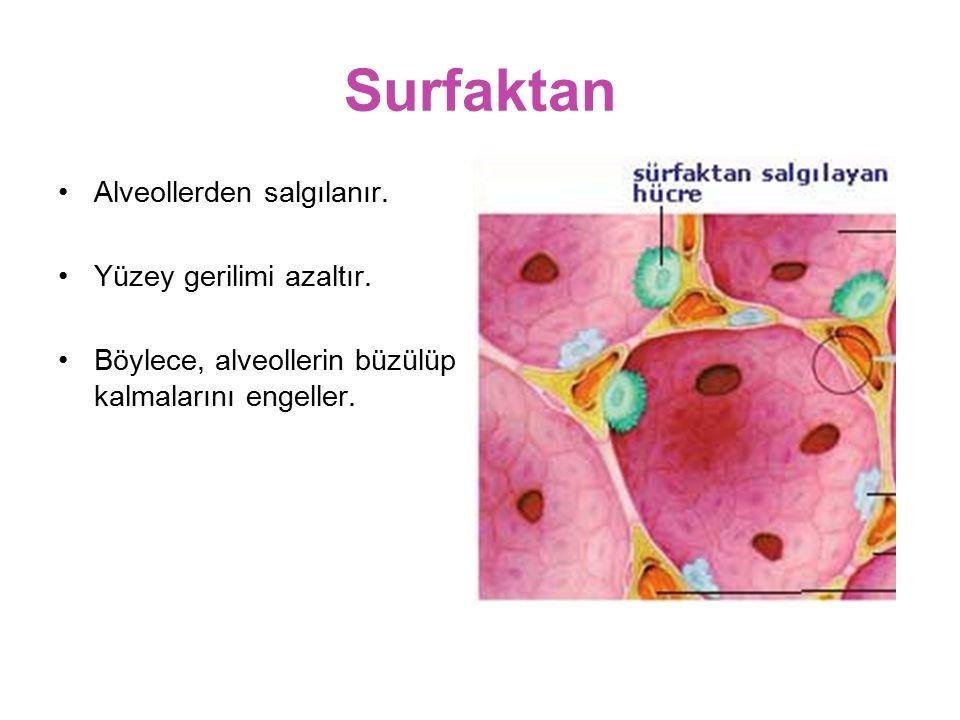 Surfaktan Alveollerden salgılanır. Yüzey gerilimi azaltır.