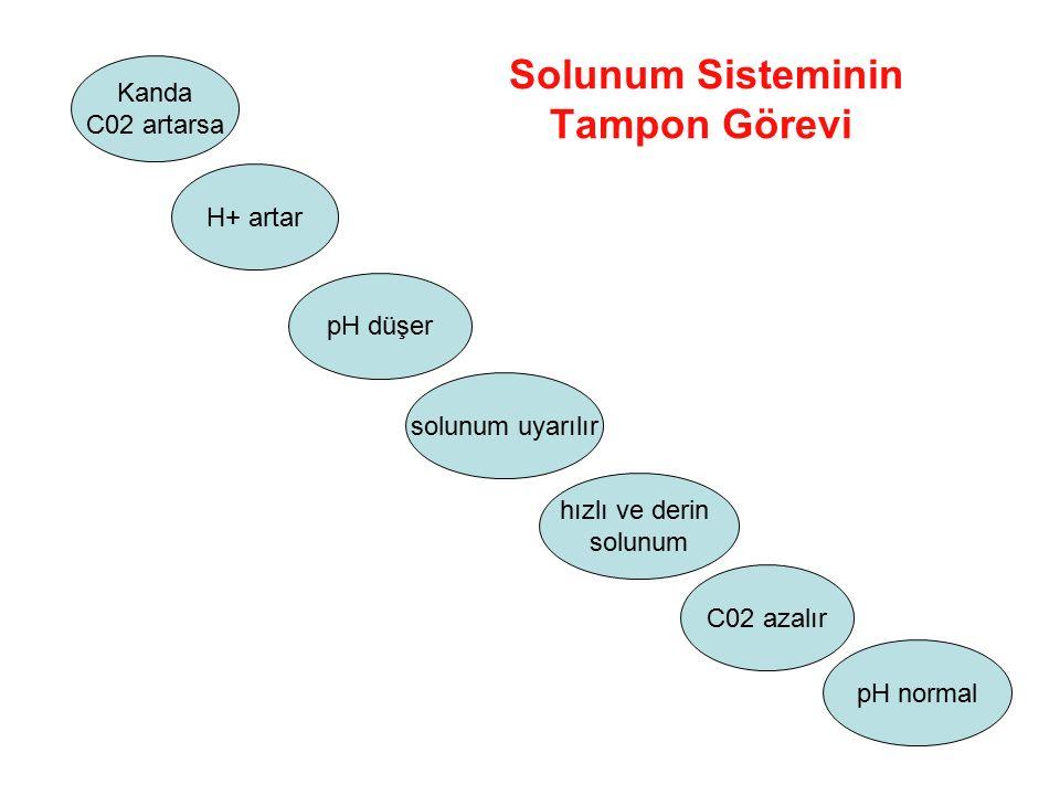 Solunum Sisteminin Tampon Görevi