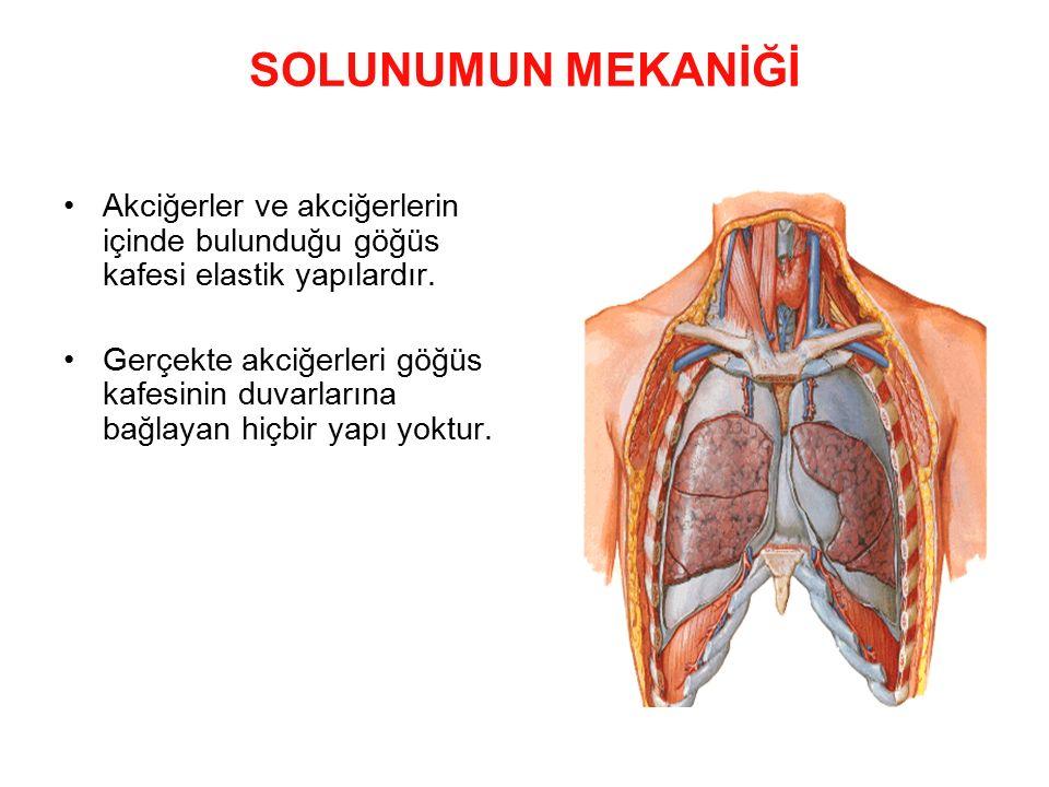SOLUNUMUN MEKANİĞİ Akciğerler ve akciğerlerin içinde bulunduğu göğüs kafesi elastik yapılardır.
