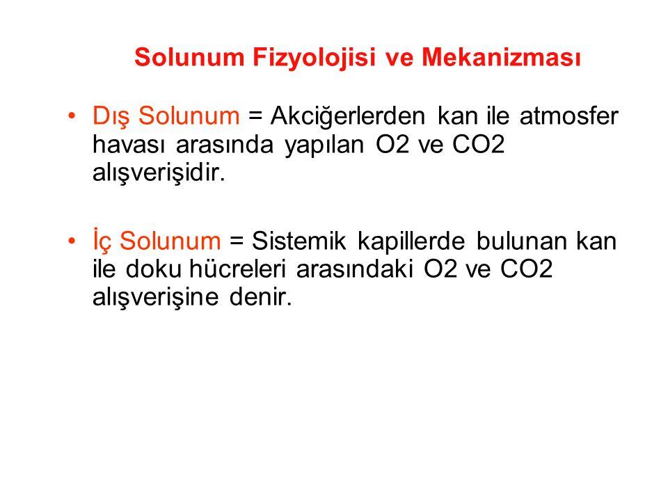Solunum Fizyolojisi ve Mekanizması