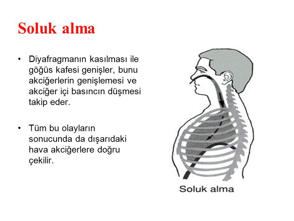 Soluk alma Diyafragmanın kasılması ile göğüs kafesi genişler, bunu akciğerlerin genişlemesi ve akciğer içi basıncın düşmesi takip eder.