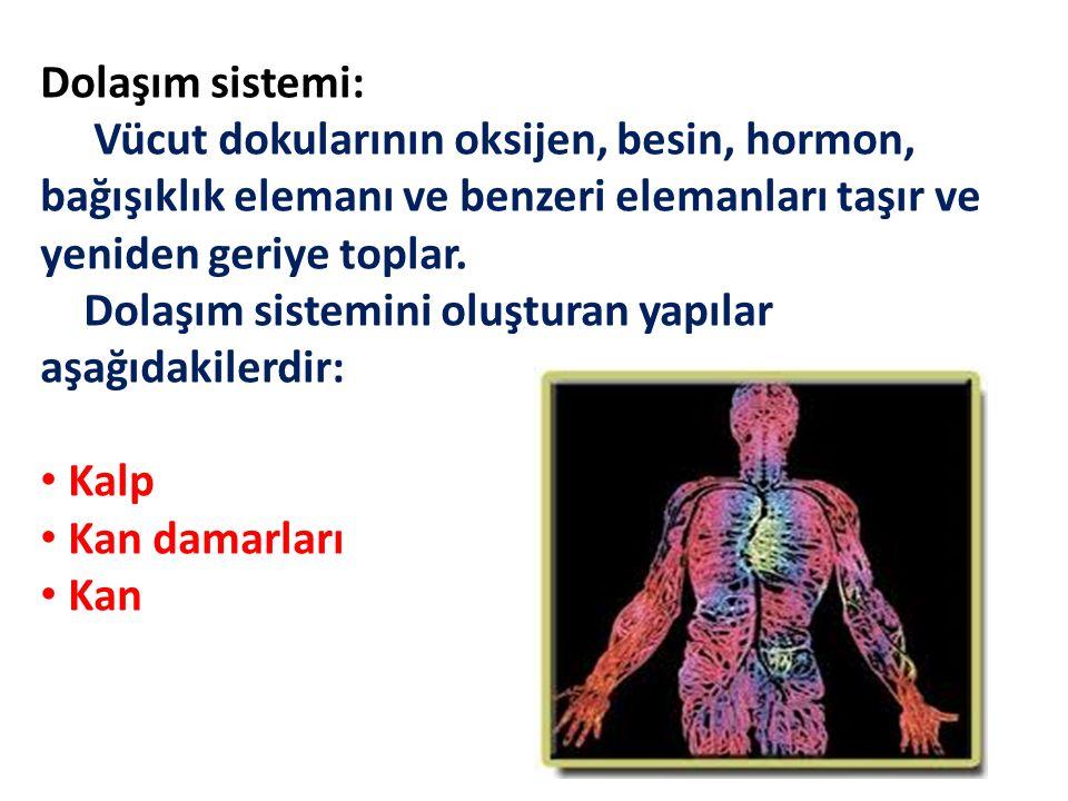 Dolaşım sistemi: Vücut dokularının oksijen, besin, hormon, bağışıklık elemanı ve benzeri elemanları taşır ve yeniden geriye toplar.