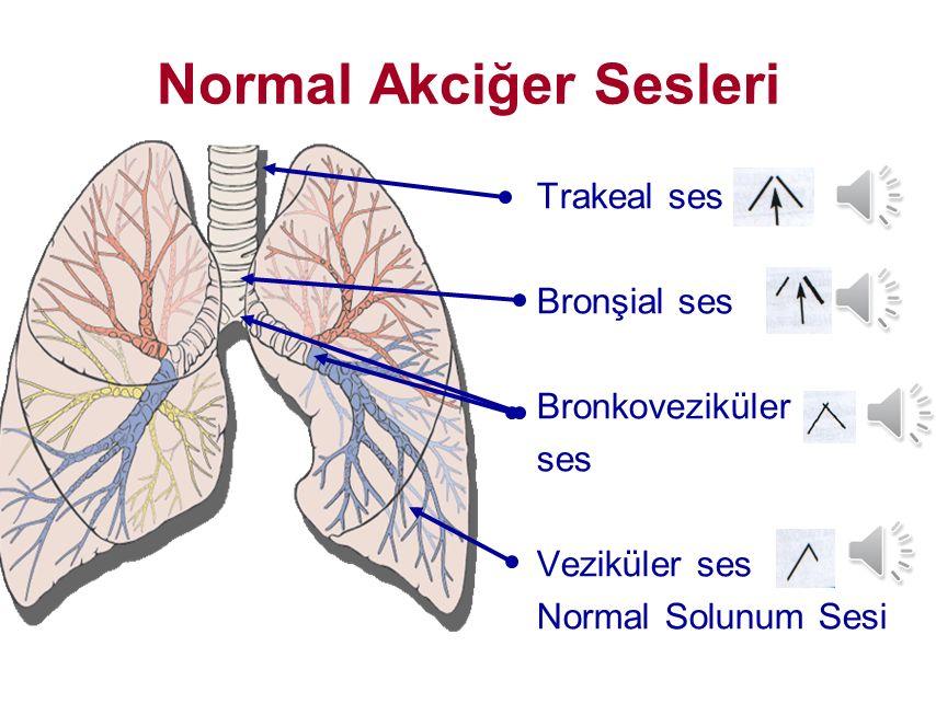 Normal Akciğer Sesleri