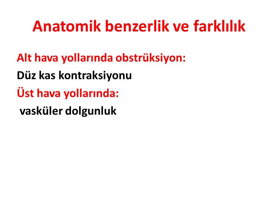 Anatomik benzerlik ve farklılık