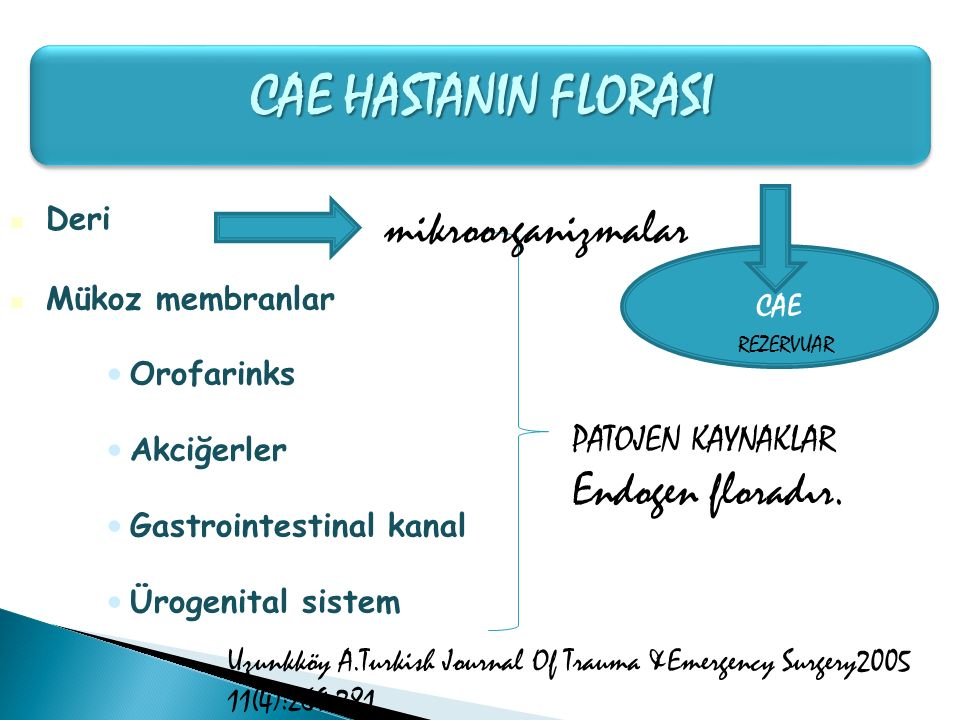 CAE HASTANIN FLORASI mikroorganizmalar Endogen floradır.