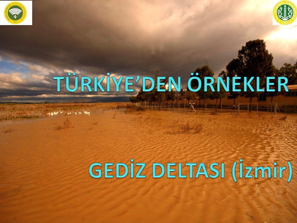 TÜRKİYE'DEN ÖRNEKLER GEDİZ DELTASI (İzmir)