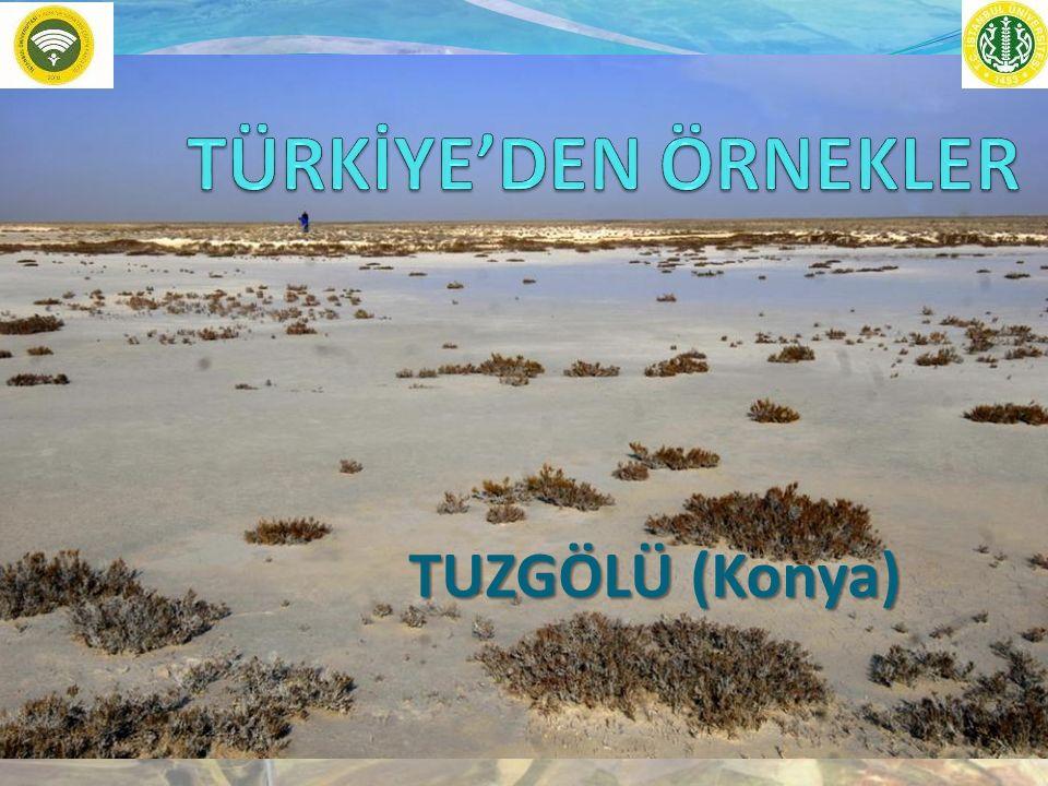 TÜRKİYE'DEN ÖRNEKLER TUZGÖLÜ (Konya)