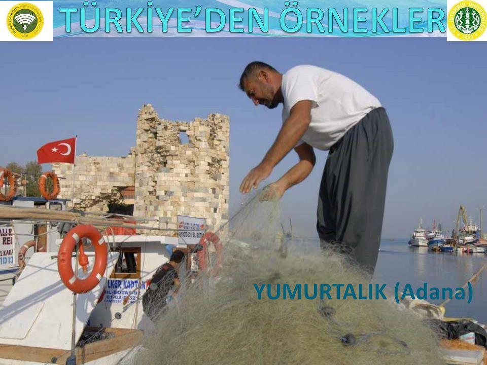 TÜRKİYE'DEN ÖRNEKLER YUMURTALIK (Adana)