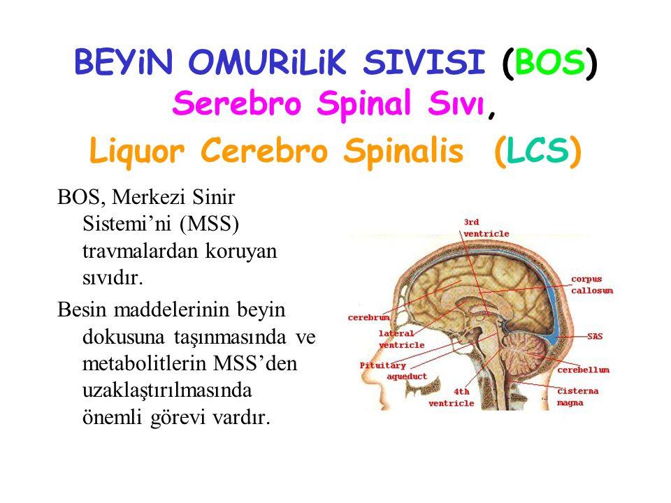 BEYiN OMURiLiK SIVISI (BOS) Serebro Spinal Sıvı, Liquor Cerebro Spinalis (LCS)