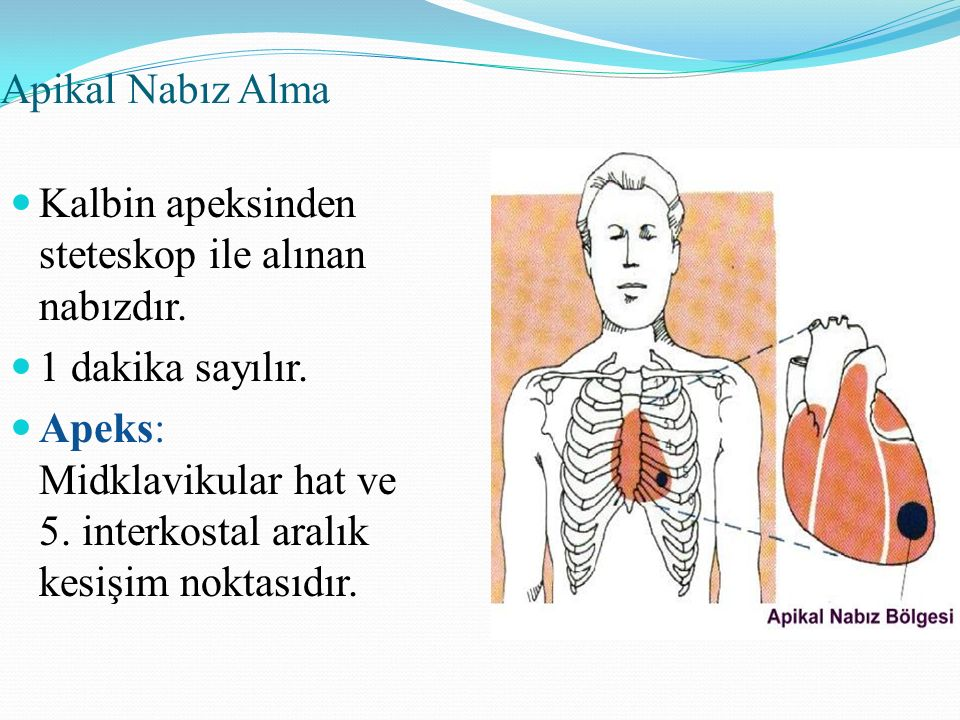 Apikal Nabız Alma Kalbin apeksinden steteskop ile alınan nabızdır. 1 dakika sayılır.