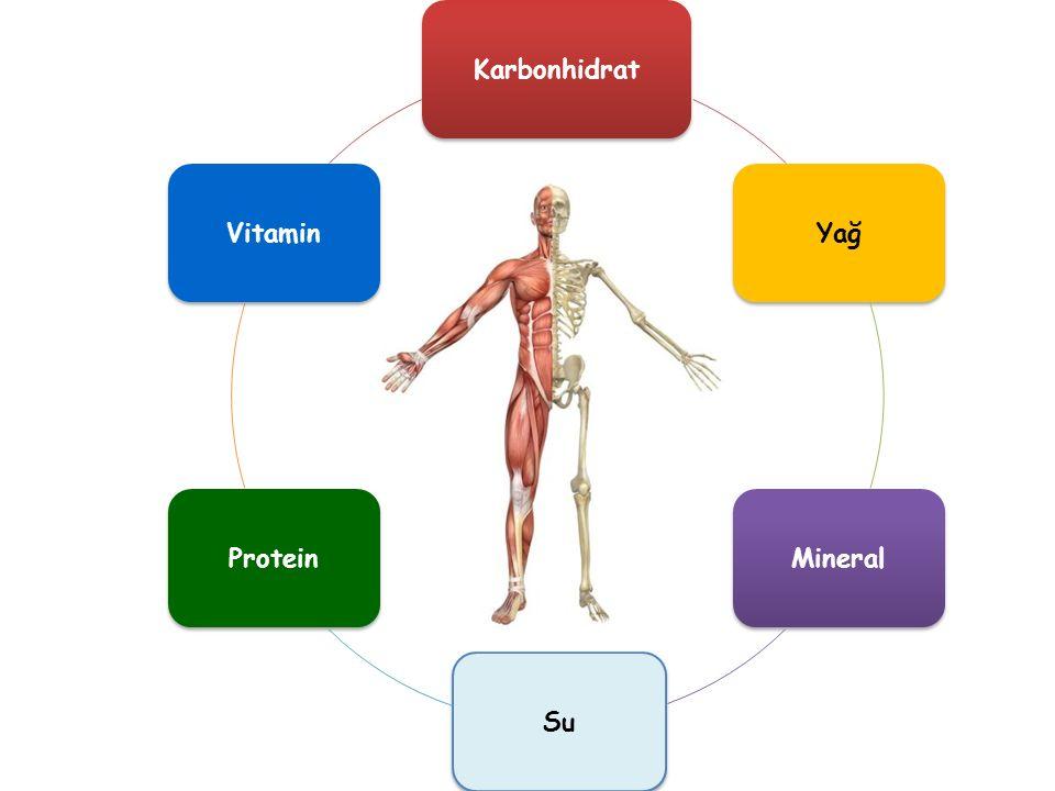 Karbonhidrat Yağ Mineral Su Protein Vitamin
